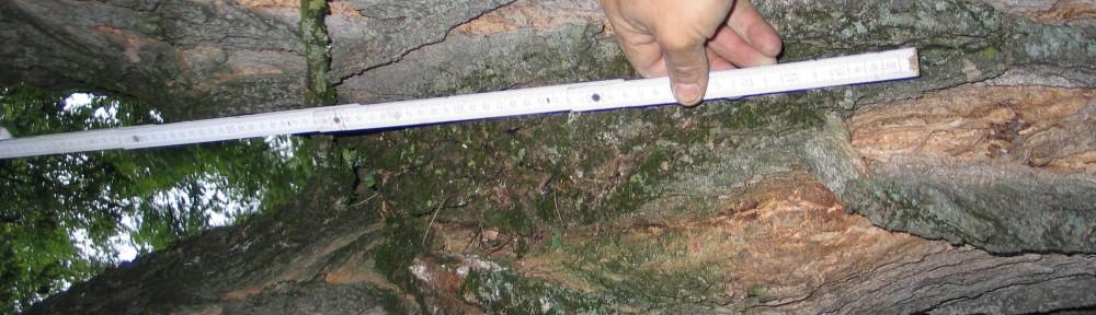 Sachverständigenbüro Baumpflegefachbetrieb Bauroth